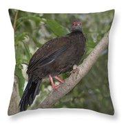 Edwards Pheasant Throw Pillow