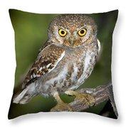 Elf Owl Throw Pillow