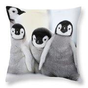 Emperor Penguin Chicks Throw Pillow