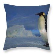 Emperor Penguins At Midnight Antarctica Throw Pillow