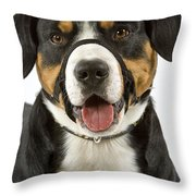 Entlebuch Mountain Dog Throw Pillow