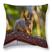 Eurasian Red Squirrel Throw Pillow