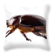 European Rhinoceros Beetle Female  Throw Pillow