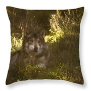 European Wolf Throw Pillow