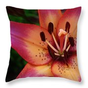 Explosion Of Color Throw Pillow