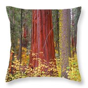 Fall In The Forest Throw Pillow
