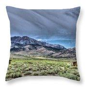 Farrington Ranch 2 Throw Pillow