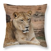 Female African Lion Throw Pillow