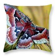 Female Promethea Moth Throw Pillow
