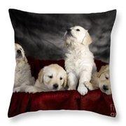 Festive Puppies Throw Pillow