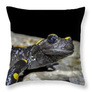 Fire Salamander Salamandra Salamandra Throw Pillow
