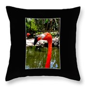 Florida Pink Flamingo Throw Pillow