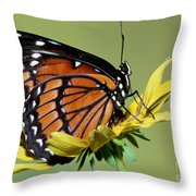 Florida Viceroy Throw Pillow