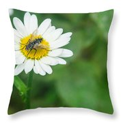 Fly On Daisy 3 Throw Pillow