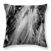 Foxtail Blowing In The Wind Throw Pillow