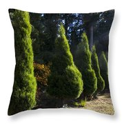 Funeral Cypress Trees Throw Pillow