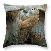 Galapagos Giant Tortoise Throw Pillow