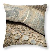 Galapagos Turtle Throw Pillow