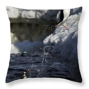 Gentoo Penguins Leaping Antarctica Throw Pillow