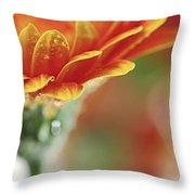 Gerbera Flower Throw Pillow