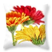 Gerbera Flowers Throw Pillow