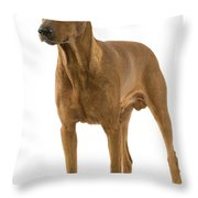German Or Standard Pinscher Throw Pillow