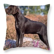 German Short-haired Pointer Puppy Throw Pillow