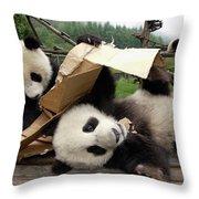 Giant Panda Ailuropoda Melanoleuca Pair Throw Pillow