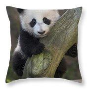 Giant Panda Cub In Tree Throw Pillow