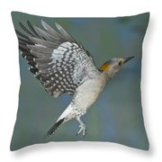 Golden-fronted Woodpecker Throw Pillow