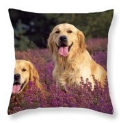 Golden Retriever Dogs In Heather Throw Pillow