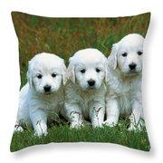 Golden Retriever Puppies Throw Pillow