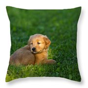 Golden Retriever Puppy Throw Pillow by Linda Freshwaters Arndt