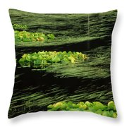 Grasses And Lilies In Beaver Pond Throw Pillow