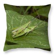 Grasshopper Mating On Grass Leaf Throw Pillow