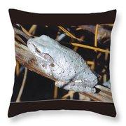 Gray Treefrog Throw Pillow