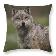 Gray Wolf  North America Throw Pillow