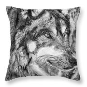 Gray Wolf Watches And Waits Throw Pillow