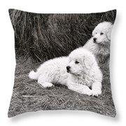 Great Pyramise Pups Throw Pillow