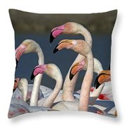 Greater Flamingos, France Throw Pillow
