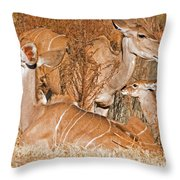 Greater Kudu Mother And Baby Throw Pillow