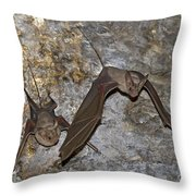 Greater Mouse-tailed Bat Rhinopoma Microphyllum Throw Pillow