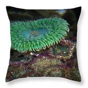 Green Anemone Throw Pillow