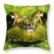 Green Frog Hiding In Duckweed Throw Pillow