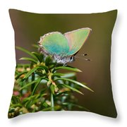 Green Hairstreak Throw Pillow