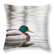 Green-headed Duck Throw Pillow