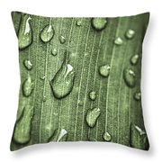 Green Leaf Abstract With Raindrops Throw Pillow by Elena Elisseeva