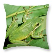 Green Tree Frog Throw Pillow