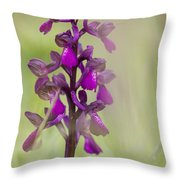 Green-winged Orchid Throw Pillow