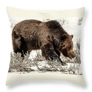 Grizzly Bear Snaggletooth Throw Pillow